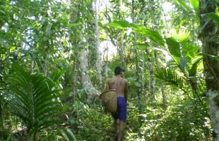 জলবায়ু পরিবর্তন এবং প্রক্রিয়া: একটি পর্যালোচনা