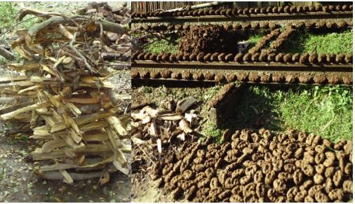 বায়োমাস : বাংলাদেশের জ্বালানি সংস্কৃতির প্রধান উৎস