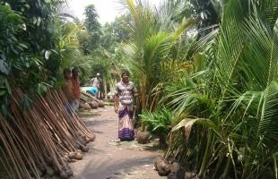 কাউখালীর নার্সারি হাট