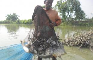 মাছের জেলা 'সাতক্ষীরা'