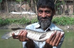 সাতক্ষীরার শোল মাছ রক্ষায় ব্যতিক্রম উদ্যোগ