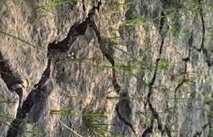 কম পানিনির্ভর শস্য-ফসল আবাদ করে পানি সঙ্কট মোকাবেলা করছেন বরেন্দা গ্রামের কৃষকরা