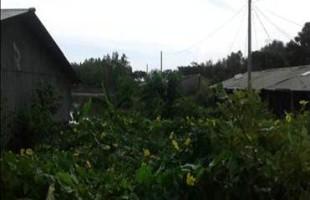 পুকুর পুনঃখনন: আশ্রয়ন প্রকল্পে বৈচিত্র্যময় ফসল চাষ ও খাদ্য নিরাপত্তা