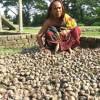 সুন্দরবনের ভাসান জ্বালানি ও প্রাকৃতিকভাবে বনসৃজন