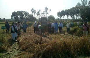 বরুন্ডি গ্রামে আমন মৌসুমে ১২১ ধরণের স্থানীয় ধানের মাঠ দিবস