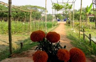 শ্যামনগর অ্যাগ্রোটেকনোলজি পার্ক: কৃষির এক উৎকৃষ্ট দৃষ্টান্ত