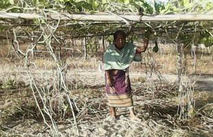 মরুময় বালি ও পাথুরে মাটিতে সবিতা মানখিনের টিকে থাকার সংগ্রাম