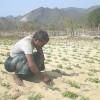 বালি জমিতে ফসল উৎপাদন করে সফল স্বপন মানখিন