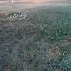 জেয়ালা গ্রামের কৃষিপ্রাণবৈচিত্র্য