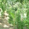 একটি খাসি পুঞ্জি (গ্রাম) এবং জীবিকা ও পরিবেশ সুরক্ষায় খাসিদের সংগ্রাম