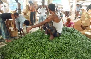 মরিচের দাম কম: মানিকগঞ্জের চাষীদের মাথায় হাত