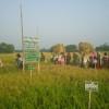 গারাদিয়া গ্রামে কৃষক নেতৃতে বোরো ধানের প্রায়োগিক গবেষণা