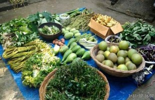 নিরাপদ খাদ্য উৎপাদনে বরাদ্দ বাড়াতে হবে