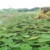 নানান দুর্যোগ মোকাবেলা করেই কৃষকরা ফসল উৎপাদন করেন