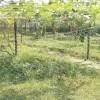 কম্পোস্ট ও সবজির গ্রাম রাজেন্দ্রপুর