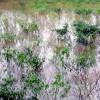 সাটুরিয়ায় শীতকালীন সবজিচাষিরা বিপাকে