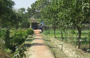 শ্যামনগর এগ্রো টেকনোলোজি পার্ক: কৃষি, প্রাণ ও প্রকৃতির পাঠশালা
