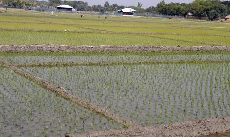 Boro-Field
