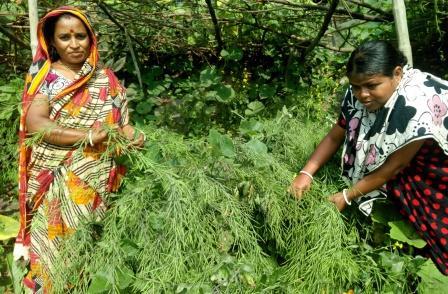 Female Farmers-4