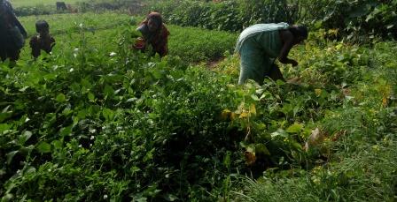 Female Farmers-3