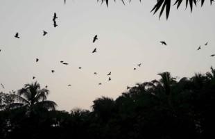 মোল্যার বাঁশতলা হতে পারে পাখির নিরাপদ আশ্রয়স্থল