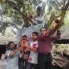 সাতক্ষীরা শহরের একটি বাড়িকে পাখি বাড়ি ঘোষণা