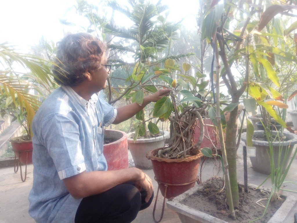 Roof Plantation (3)