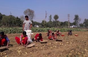 তানোরে মজুরি বৈষম্যের শিকার নারী শ্রমিকরা