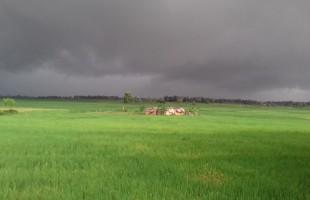শরৎ-হেমন্ত-বসন্ত গিয়েছে, শীত-গ্রীষ্ম-বর্ষাও বিরূপ