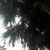 বাবুই পাখির বাসায় জোনাকির আলো