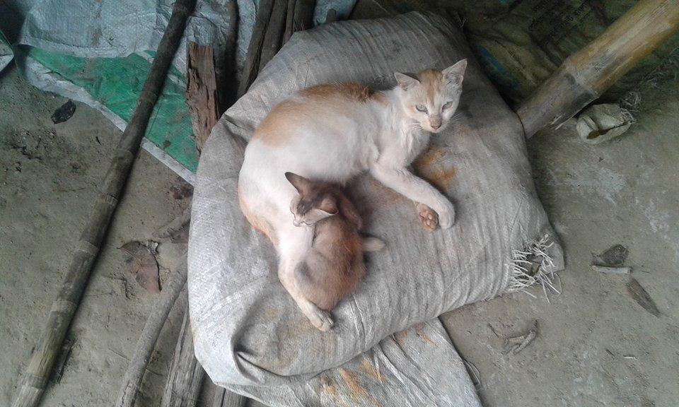 cat pic-2