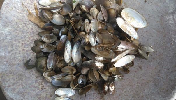 শিব নদীতে সম্মিলিত উদ্যোগে তৈরি হবে ঝিনুকের অভয়াশ্রম