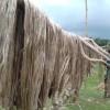 কৃষকের চোখে সোনালি স্বপ্ন