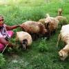 শহরের সবুজ ঘাসে বস্তির নাদিরার স্বপ্ন