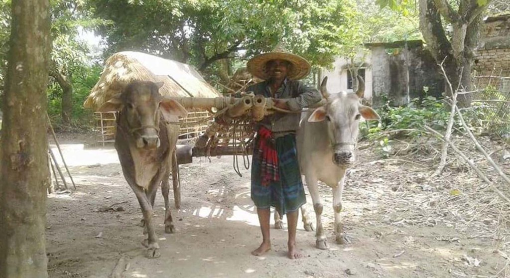 Satkhira Cow Car photo (2)