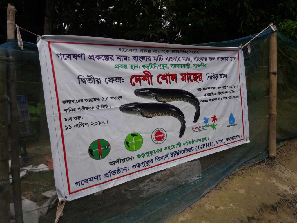 satkhira zakir fish photo (2)