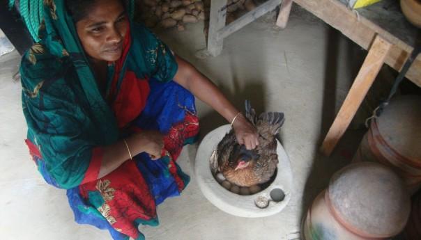 হাজল পদ্ধতিতে মুরগির বাচ্চা তৈরি