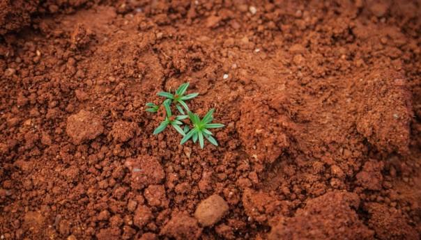 জলবায়ু পরিবর্তন মোকাবিলায় মাটিও গুরুত্বপূর্ণ অবদান রাখতে পারে