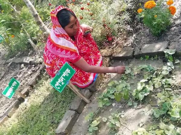 অচাষকৃত উদ্ভিদ সংরক্ষণ করছেন নাজমা বেগম