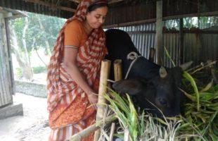 স্বনির্ভর একজন নারী সেলিনা বেগম