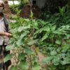 কৃষি ও কৃষকই দেশের প্রাণ: কৃষক সন্তোষ মন্ডল