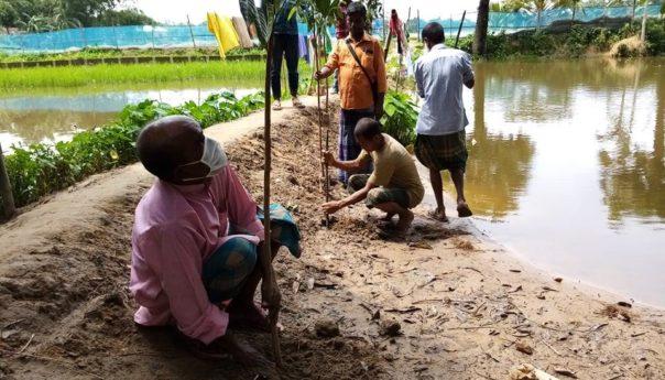 পরিবেশ দিবস উপলক্ষে কলমাকান্দায় বৃক্ষরোপণ