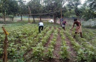 করোনাকালে তরুণদের সবজি উৎপাদনের উদ্যোগ