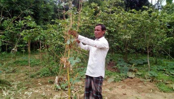 একজন আদিবাসী সফল কৃষক নাহাজং হাজং