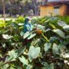 খাদ্য সংকট মোকাবেলায় অচাষকৃত শাকসবজি গুরুত্বপূর্ণ ভূমিকা রাখে
