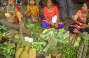 কোভিড-১৯ মোকাবিলায়: শতবাড়ি উন্নয়ন মডেলের মাধ্যমে পরিবারভিত্তিক পুষ্টিব্যাংক