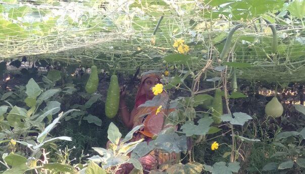 প্রাণবৈচিত্র্য সমৃদ্ধি করতে নাজমা বেগমের উদ্যোগ