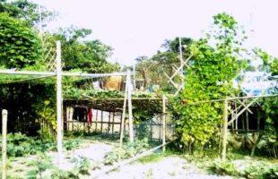বৈচিত্র্যময় সবজিতে ভরে গেছে হাওরের গ্রামগুলো